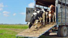 Перевозки животных автотранспортом
